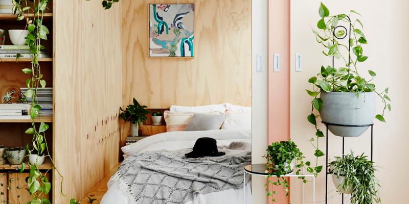 These Are The Best Bedroom Plants to Help You Get a Better Sleep 10 Bedroom Plants These Are The Best Bedroom Plants to Help You Get a Better Sleep These Are The Best Bedroom Plants to Help You Get a Better Sleep 10