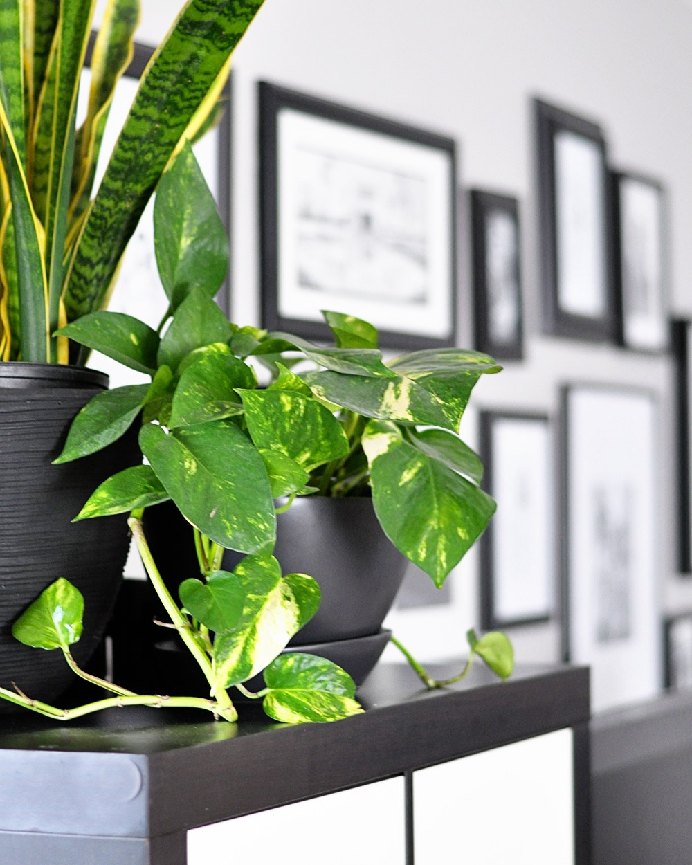 These Are The Best Bedroom Plants to Help You Get a Better Sleep 4