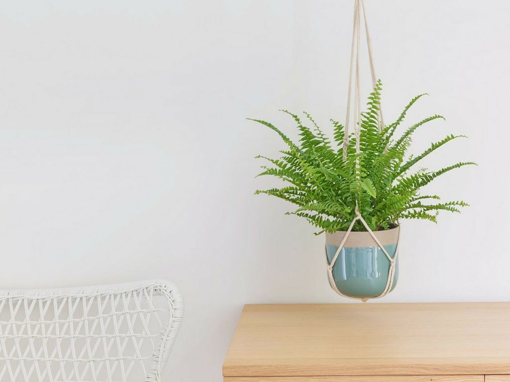 These Are The Best Bedroom Plants to Help You Get a Better Sleep 5