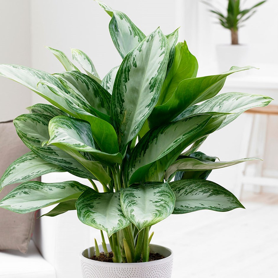 These Are The Best Bedroom Plants to Help You Get a Better Sleep 6